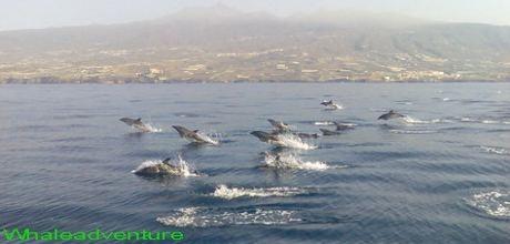 La aventura de las ballenas en tenerife observaci n de for Piscina la ballena tenerife